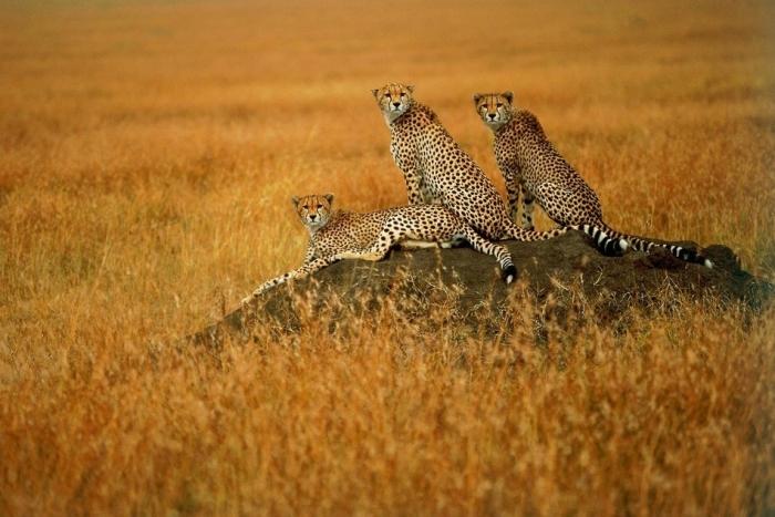 Divlje životinje 46029610