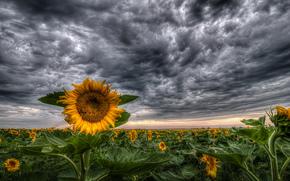 Suncokreti-sunflowers - Page 33 65263010