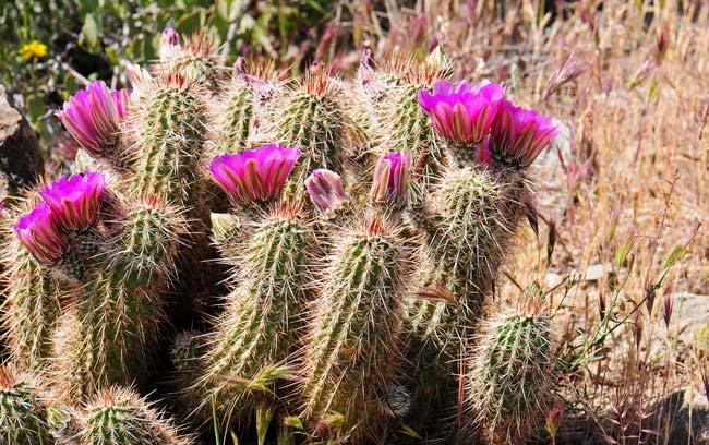 Kaktusi - Page 36 7154ec10