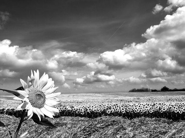 priroda u crno beloj boji - Page 24 73746510