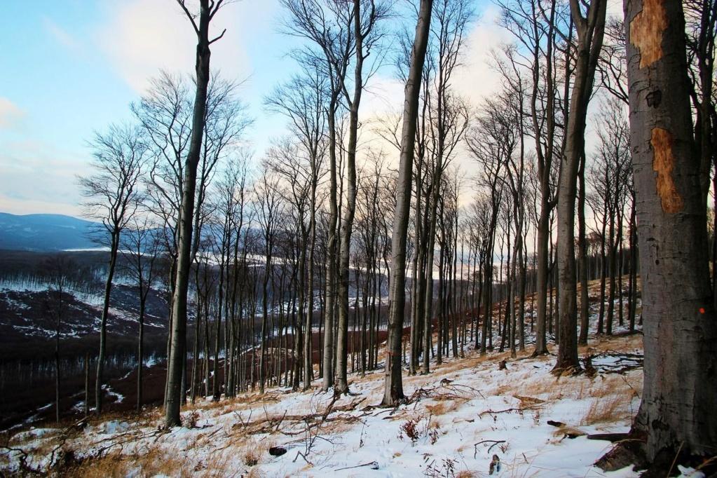 Zimski pejzaži-Winter landscapes - Page 13 74736510