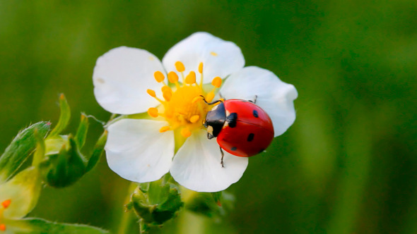 Leptiri i ostali insekti - Page 3 8085_l10