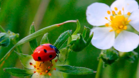 Leptiri i ostali insekti - Page 3 8087_l10
