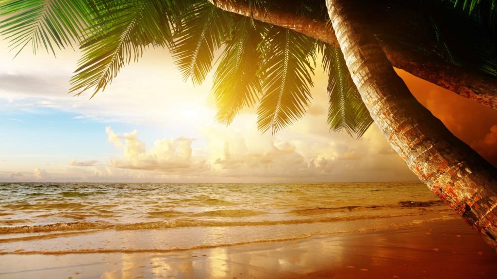 More,jezero,reka...plaža,palma... - Page 29 87692410