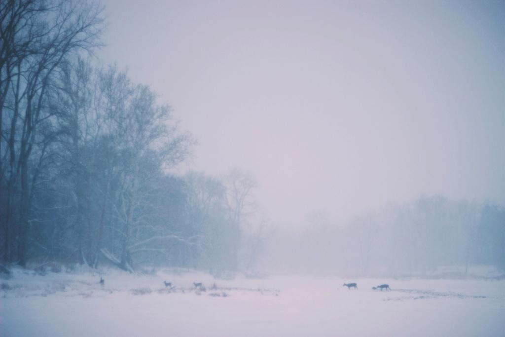 Zimski pejzaži-Winter landscapes - Page 13 8929-w12