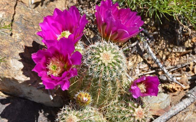 Kaktusi - Page 36 9141ec10