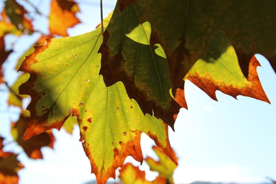 Listovi - Page 33 Autumn15