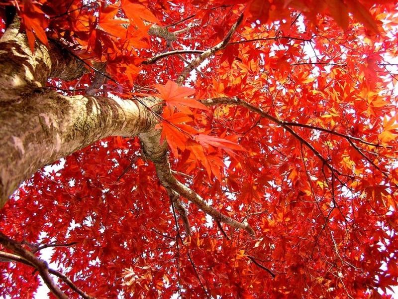 Jesen - Page 38 Autumn42