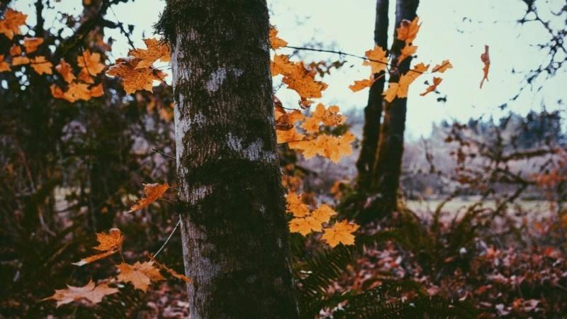 Jesen - Page 38 Autumn47