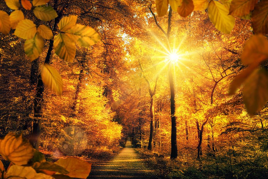 Putevi sreće - Page 2 Autumn70