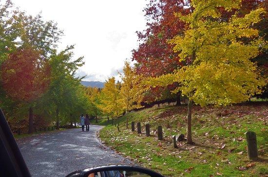 Putevi sreće - Page 5 Autumn82