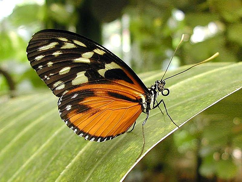 Leptiri i ostali insekti - Page 3 Bcr-wo10