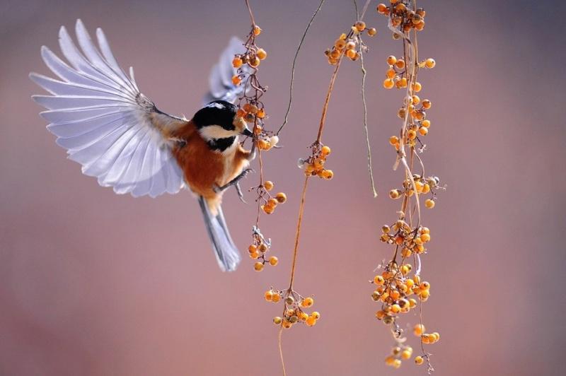 Ptice - Page 5 Bird-111