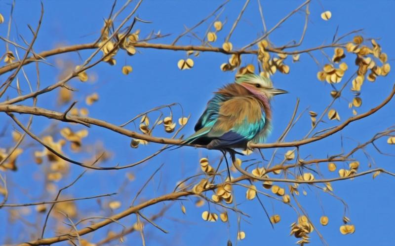 Ptice - Page 5 Bird_s10