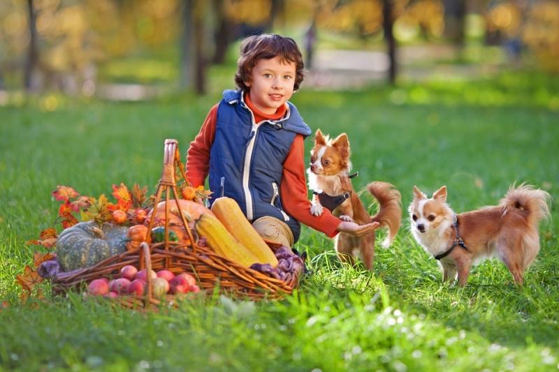 Deca i životinje - Page 19 Boy-2910