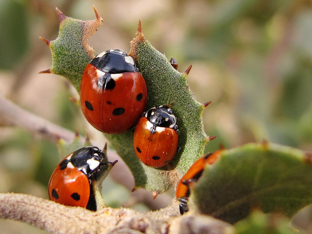 Leptiri i ostali insekti Bubama10