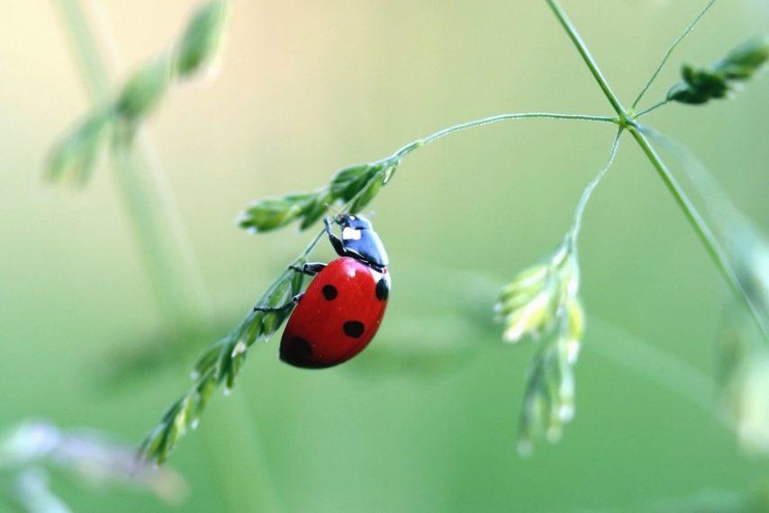 Leptiri i ostali insekti Bubama11