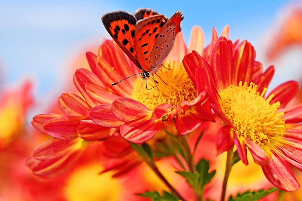 Leptiri i ostali insekti Butter22