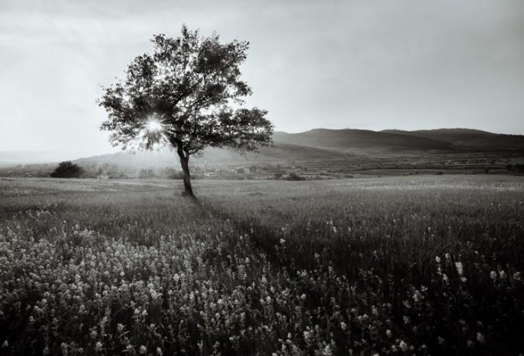 priroda u crno beloj boji - Page 24 Cherno10