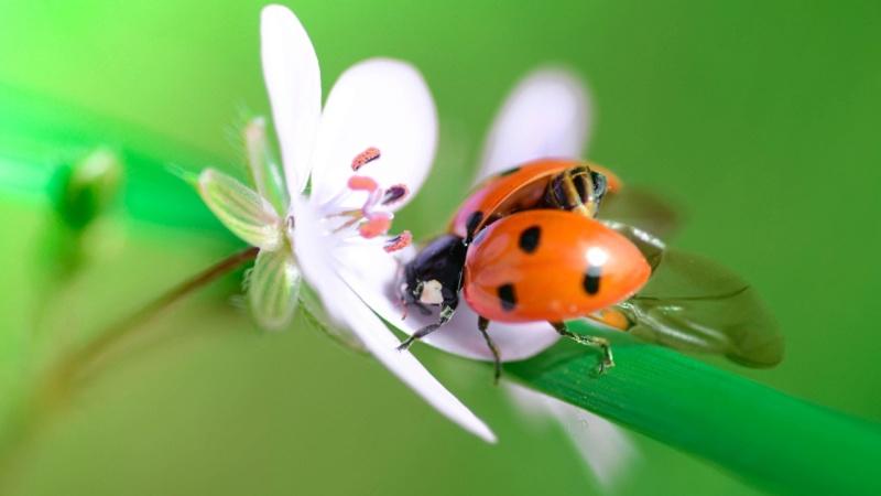 Leptiri i ostali insekti - Page 3 Closeu38
