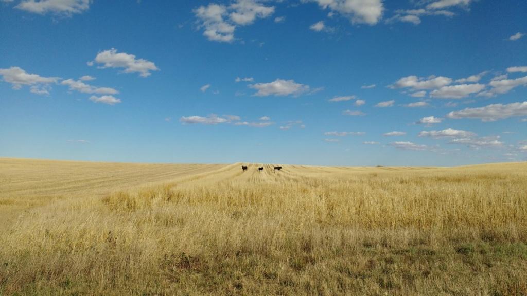 Žitna polja - Page 21 Corn_s10