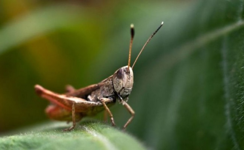 Leptiri i ostali insekti Cvrc4810