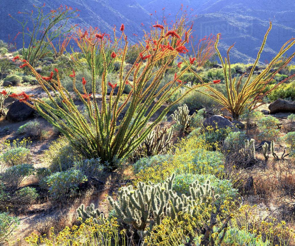 Kaktusi - Page 36 D256_310