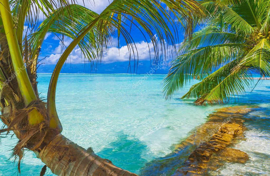 More,jezero,reka...plaža,palma... - Page 29 Deposi59