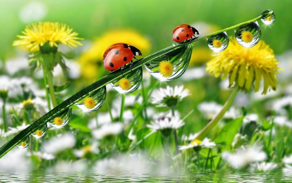 Leptiri i ostali insekti Deskto17