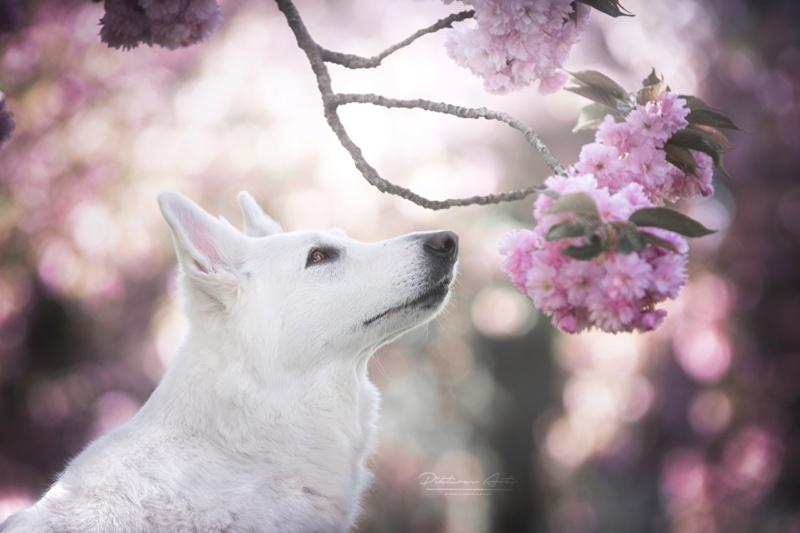 Psi i macke - Page 2 Dogs_b13