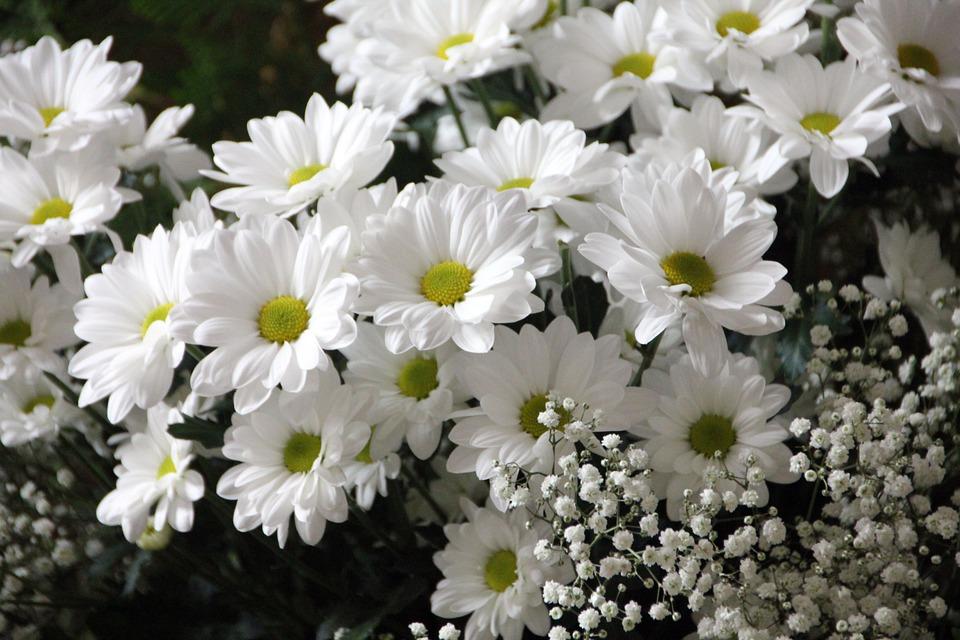 Cveće - Page 31 Flower28