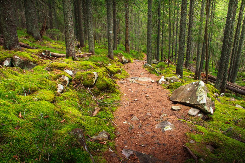 Putevi sreće - Page 2 Forest22
