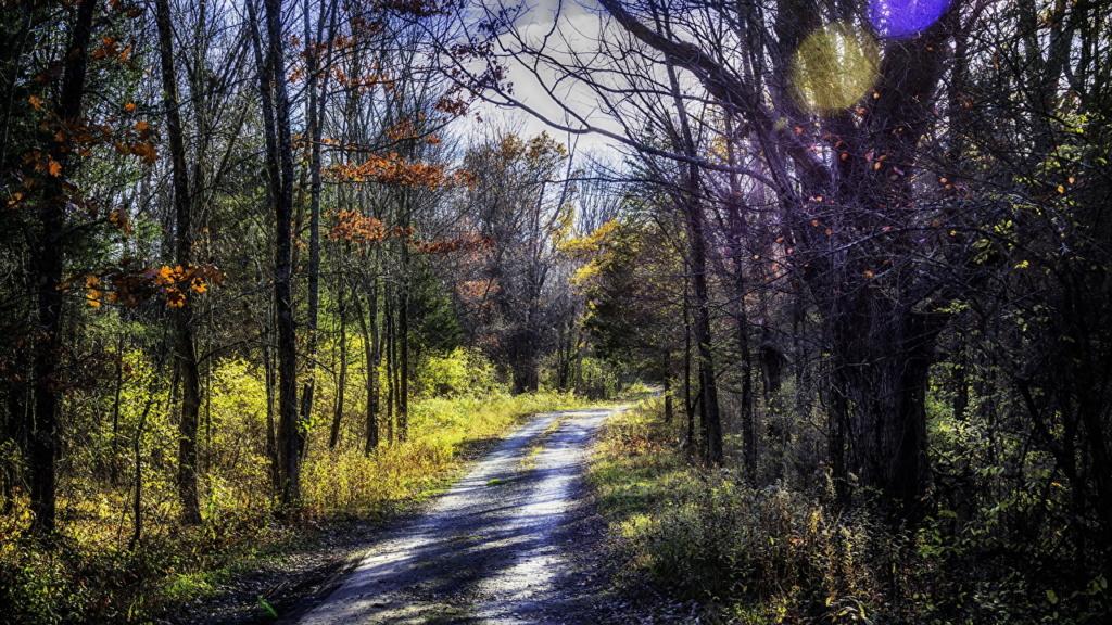 Putevi sreće - Page 2 Forest23