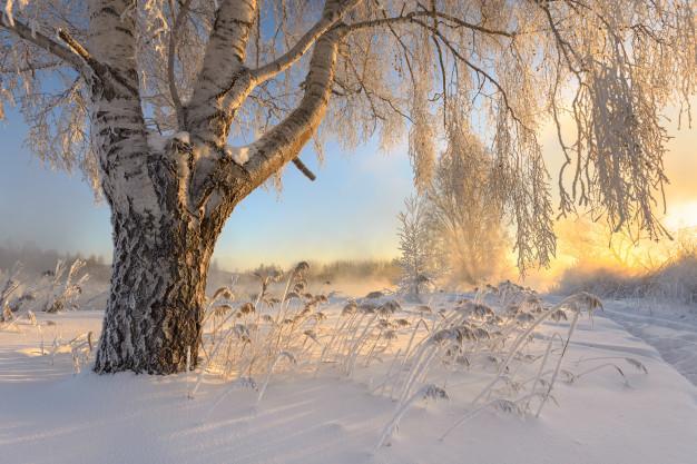 Zimski pejzaži-Winter landscapes - Page 24 Frosty12