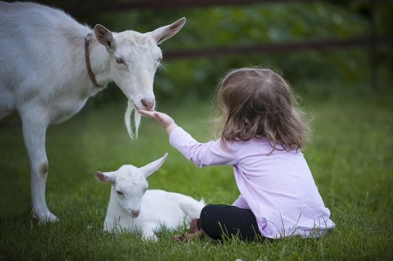 Deca i životinje - Page 20 Goat-310
