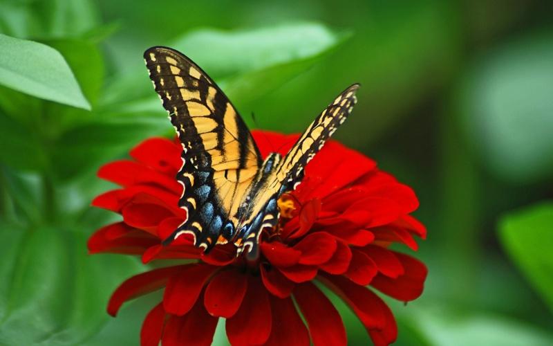 Leptiri i ostali insekti - Page 3 High_r10