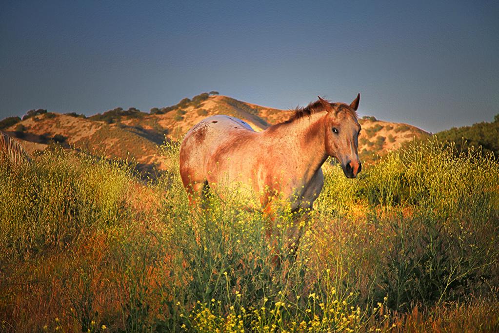 Konji vrani.. - Page 2 Horses34
