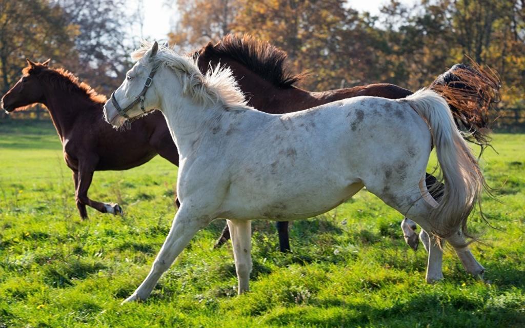 Konji vrani.. - Page 2 Horses35