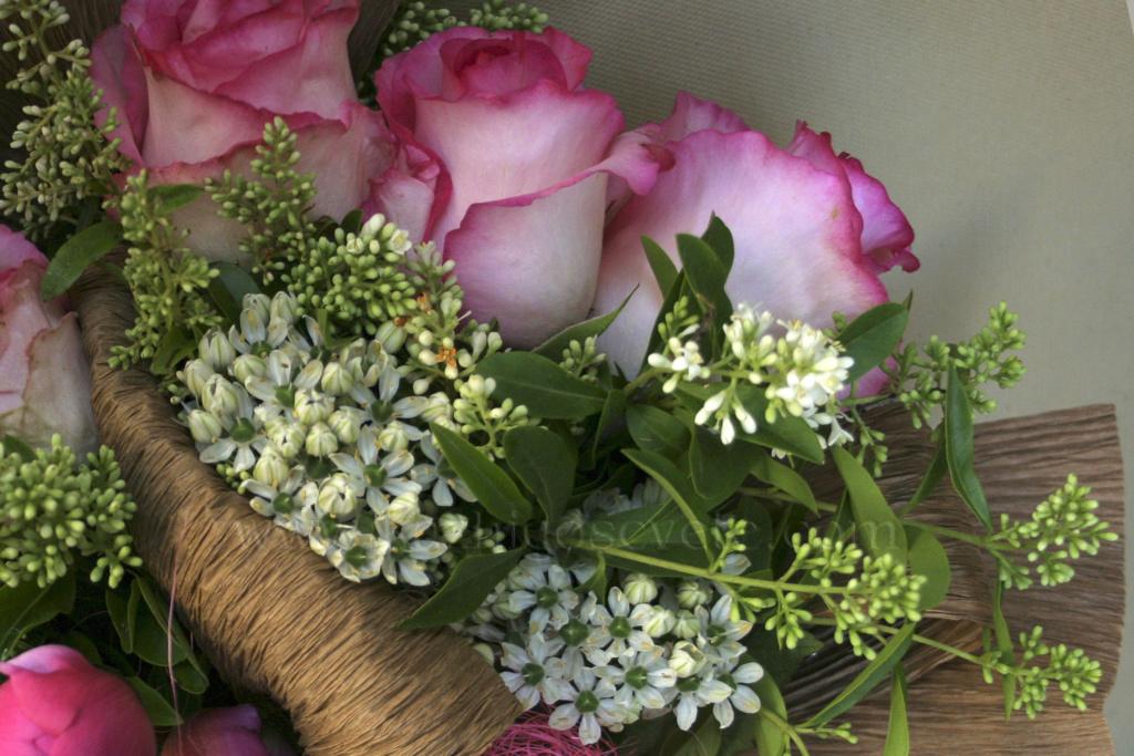 Cveće - Page 23 Img_5810