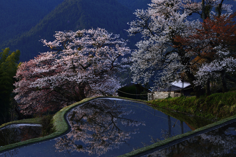 Proleće - Page 22 Japan_40