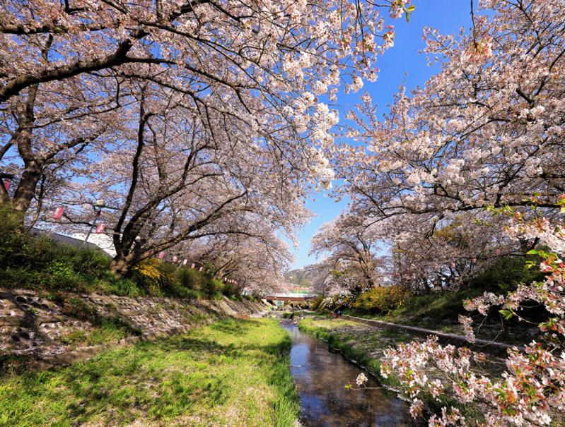 Proleće - Page 22 Japan_41