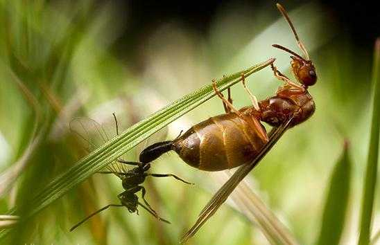 Leptiri i ostali insekti Kak-ot10