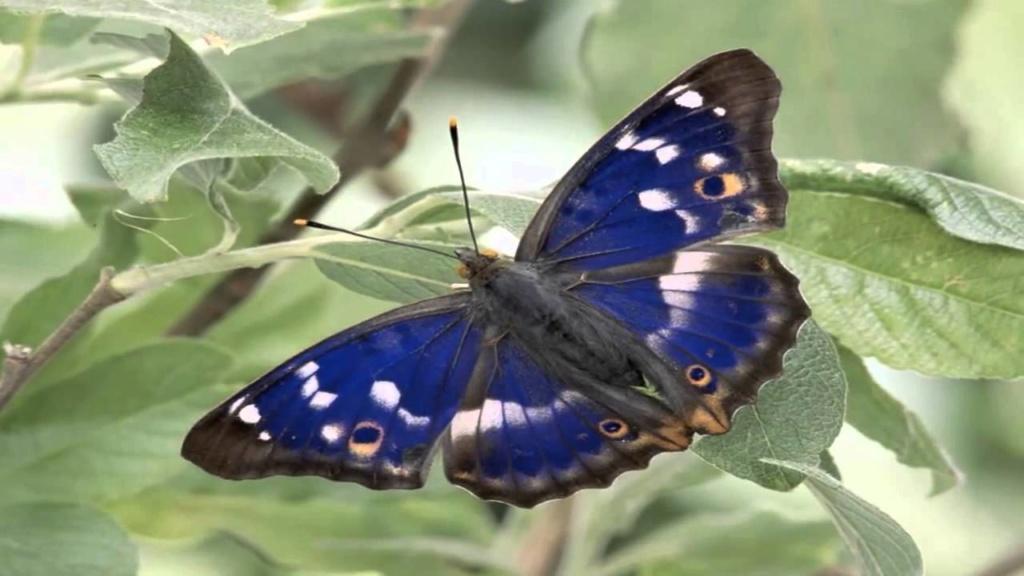Leptiri i ostali insekti - Page 3 Maxre112