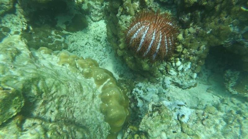 Podvodni svet (osim riba) - Page 11 Maxres60