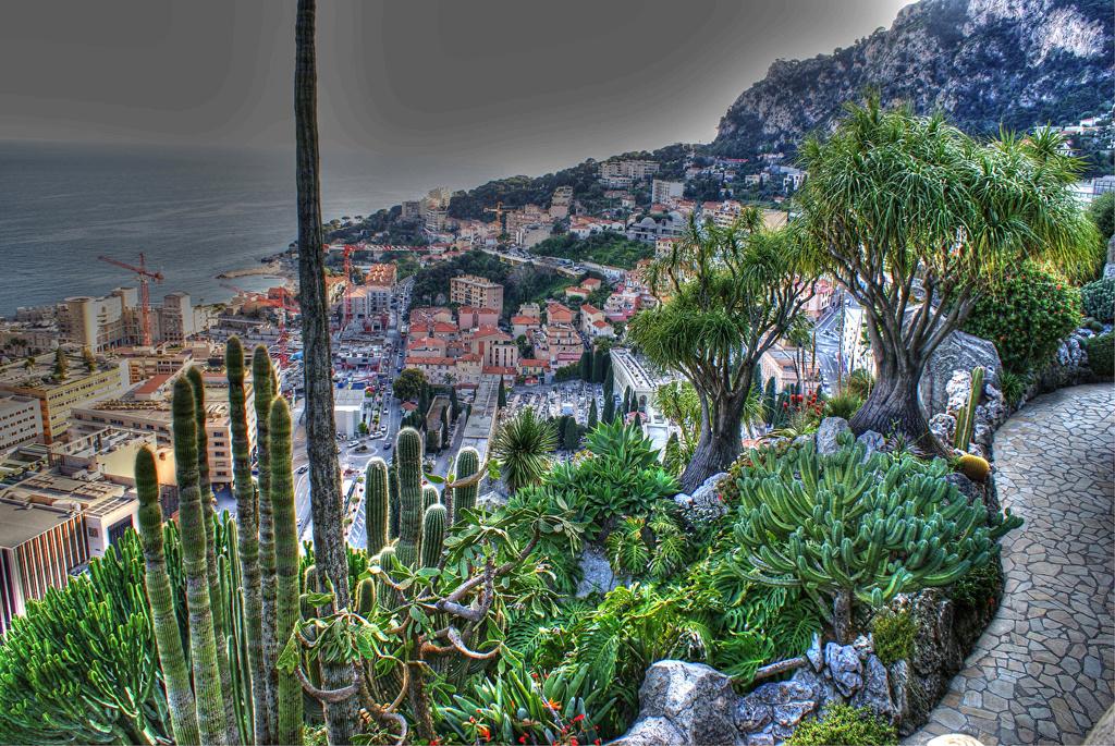 Kaktusi - Page 36 Monaco10