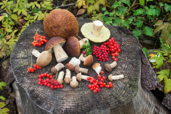 Gljive - Page 27 Mushro10