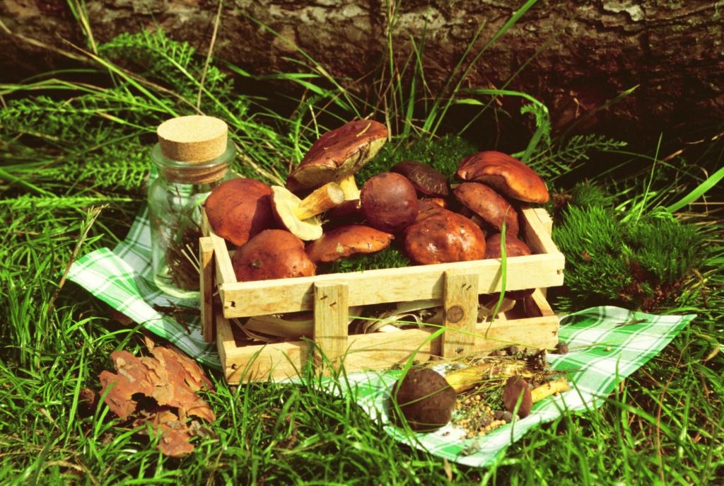 Gljive - Page 27 Mushro13
