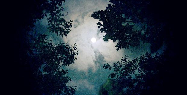 Mesečina - Page 39 Noc-me10