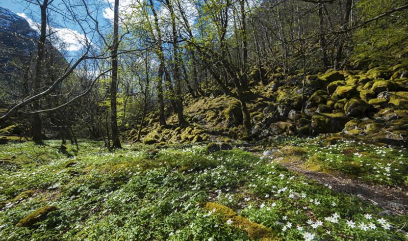 Proleće - Page 22 Norway65