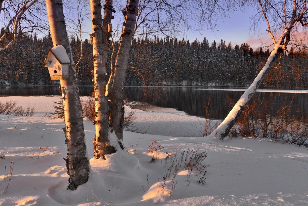 Zimski pejzaži-Winter landscapes - Page 16 Pexels16